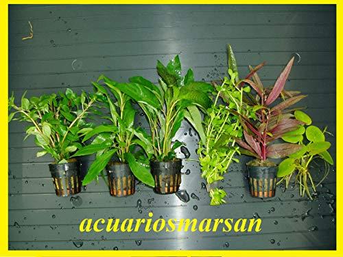 ACUARIOS MARSAN Plantas...