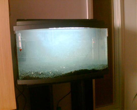 Agua turbia en acuario
