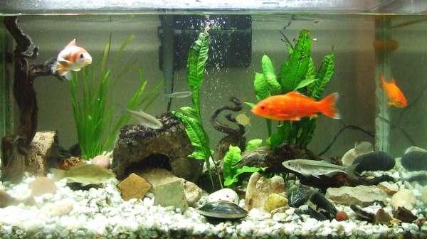 Llenar acuario de agua