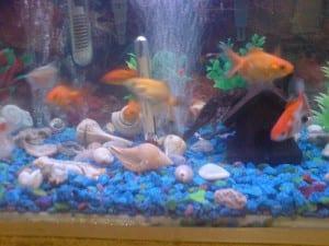 Cuántos peces caben en un acuario