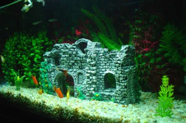 C mo decorar tu acuario - Fotos de acuarios decorados ...