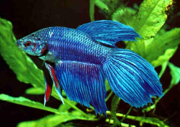68967386 1 Fotos de venta de peces tropicales y agua dulce