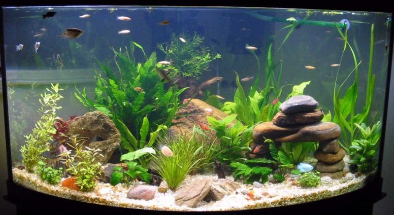 decoracion acuarios agua dulce plantas acu ticas en nuestro acuario
