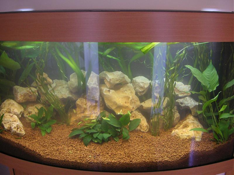 La importancia del ciclado del acuario - Decoracion acuario marino ...