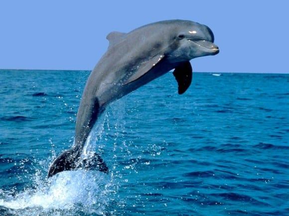 Comunicación entre los delfines