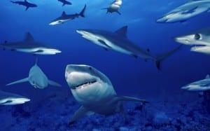 Vínculo entre los tiburones y las personas