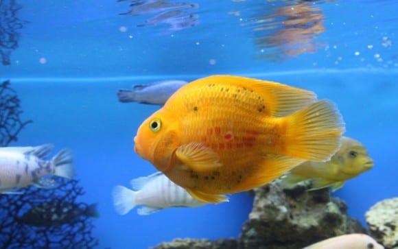 Enfermedades de peces tropicales