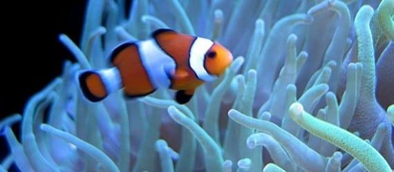 Los peces pueden comunicarse