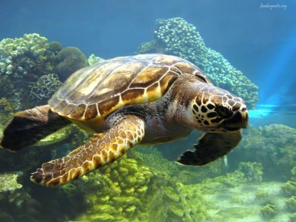 La particular forma de orientarse de las tortugas