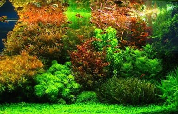 Problemas que sufren las plantas acuáticas