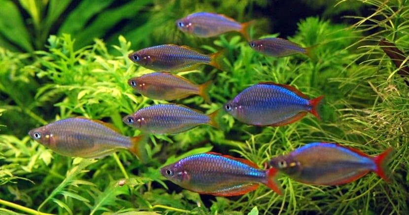 ruidos peces