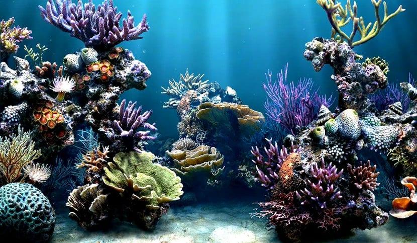 Ni falta ni exceso de ox geno en el acuario for Peces que no necesitan oxigeno