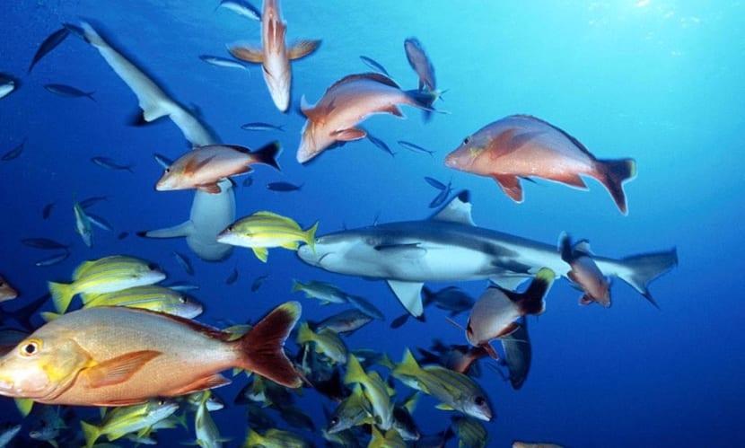 grupos peces
