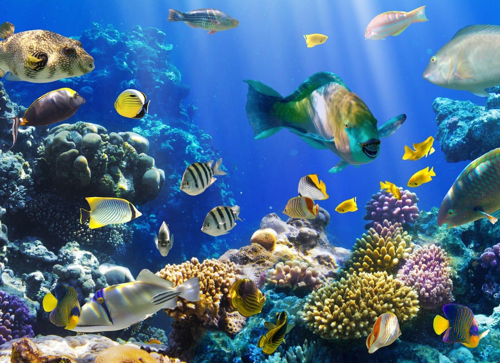 Desarrollo de los peces los huevos for Cuadros con peces