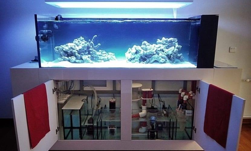 Fabrica tu propio acuario