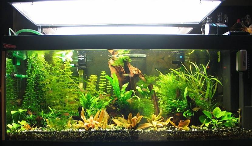Correcta iluminaci n en el acuario for Todo para acuarios