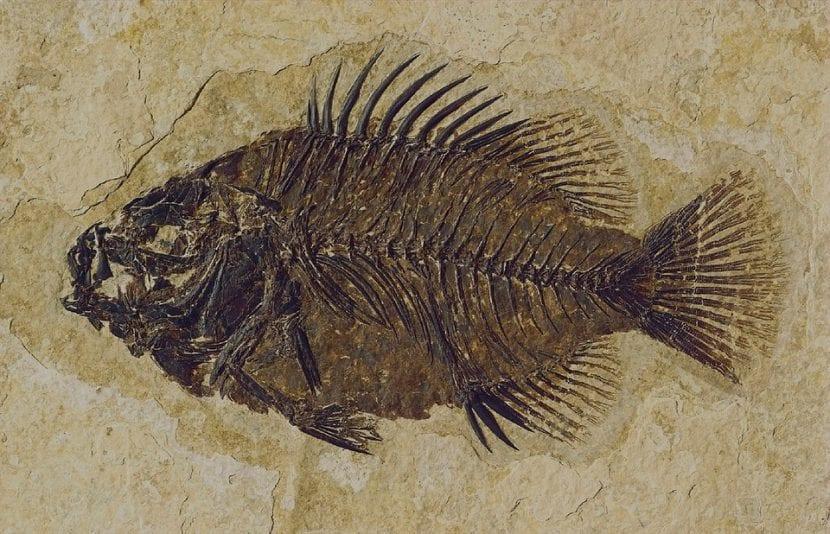 fósil pez prehistórico