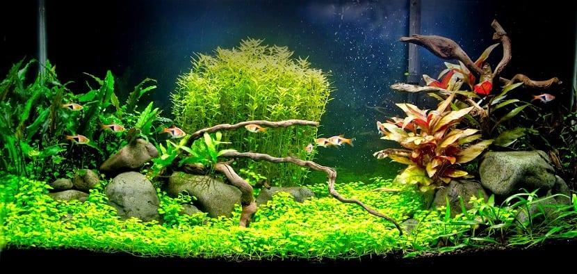 Las mejores plantas de acuario de agua dulce cu les son for Todo para acuarios