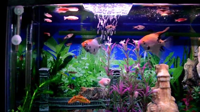 Acuario peces de agua dulce
