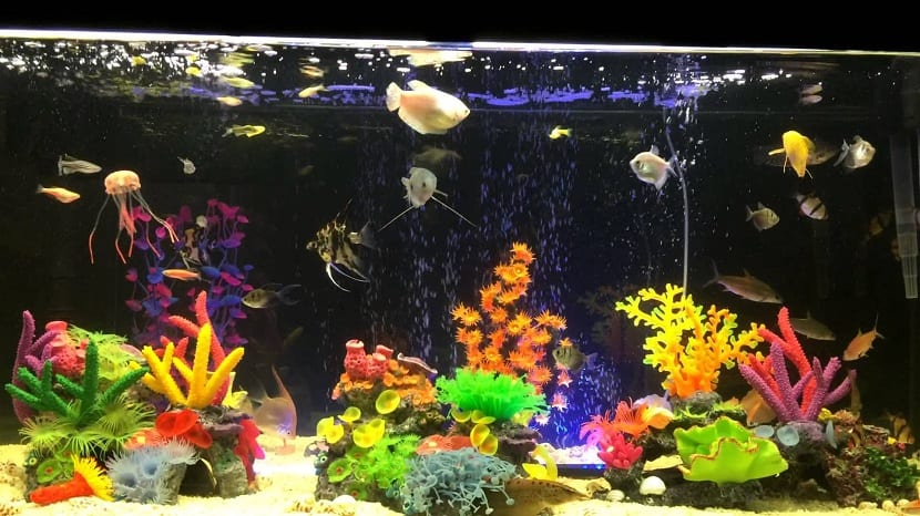 Acuarios para peces tropicales