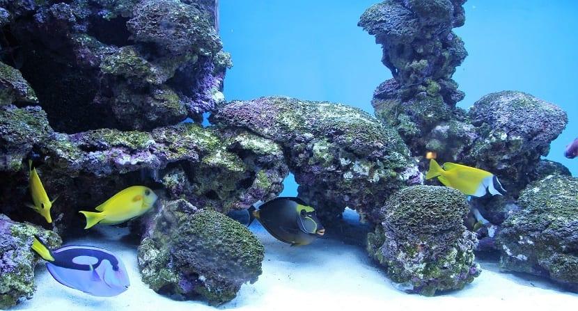 Piedras y escondites para los peces