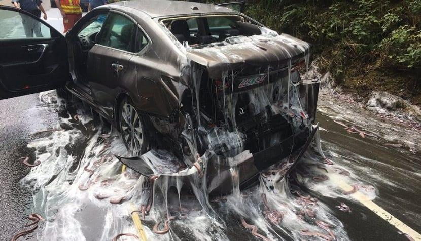 accidente de tráfico con peces bruja