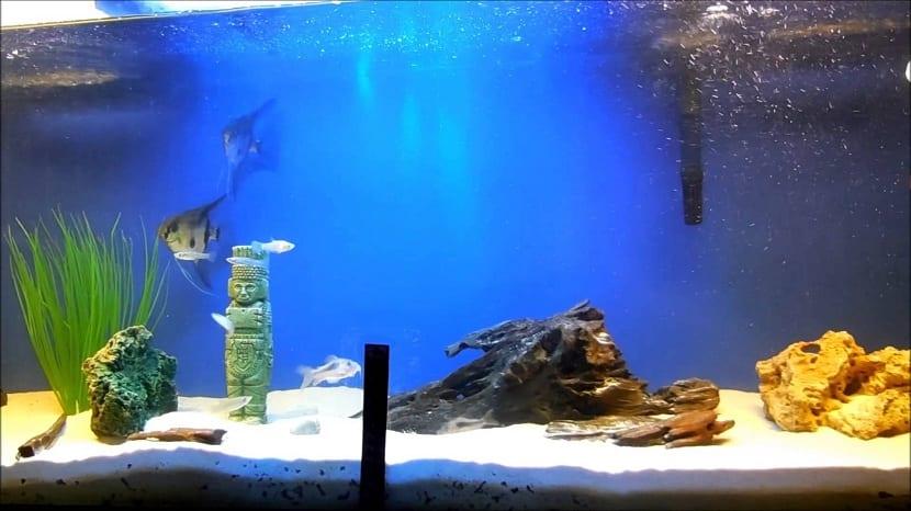 Fondo del acuario de agua salada