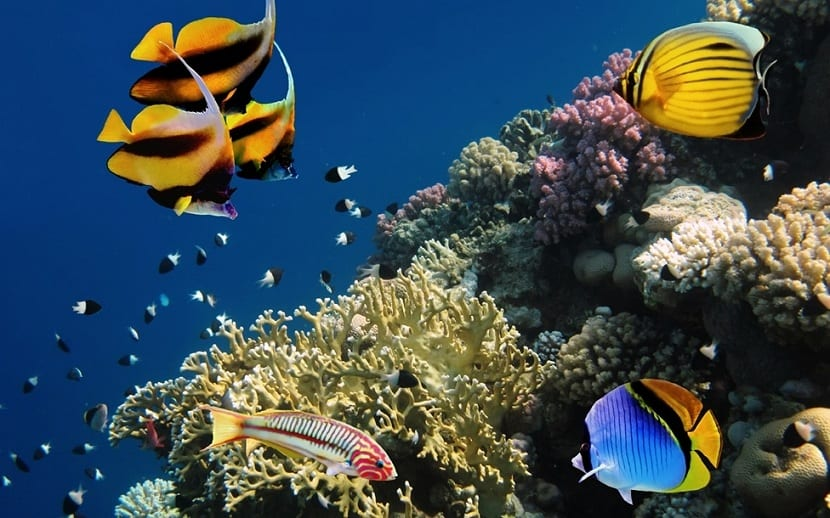 Hábitat del pez mariposa