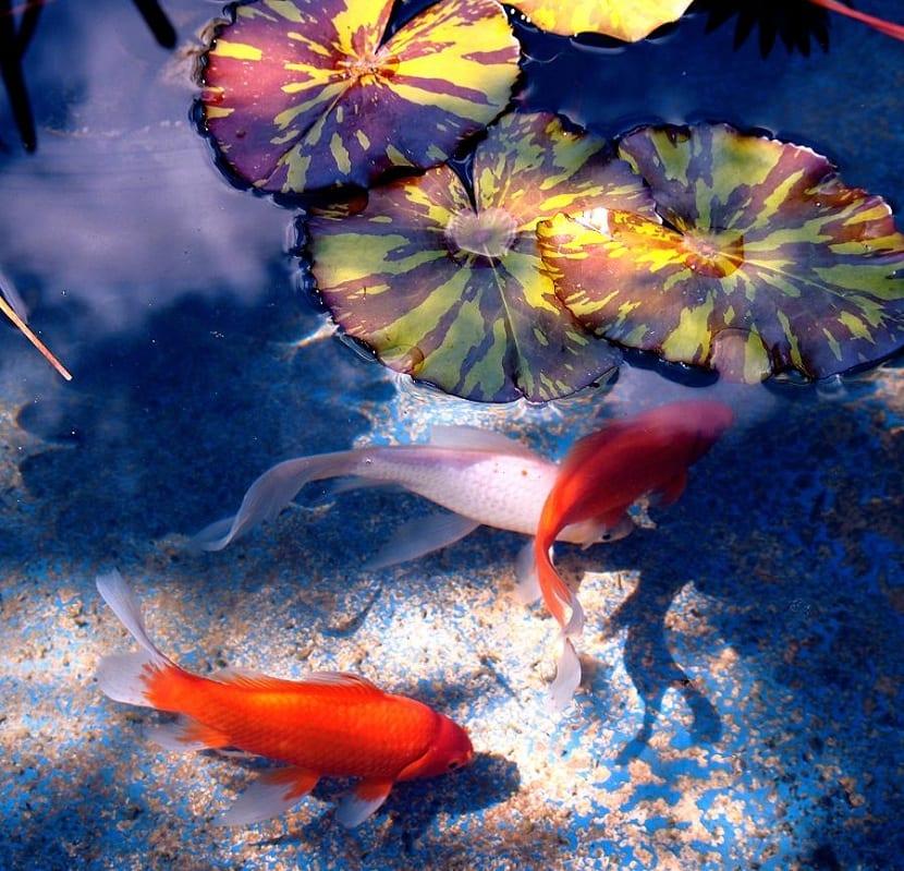 Mejores peces para estanques