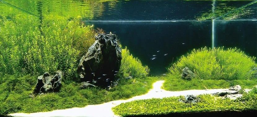 Weed tortuga para acuario