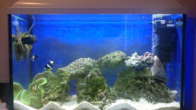 Skimmer colocado en un acuario