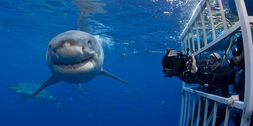 El hombre y el tiburón blanco