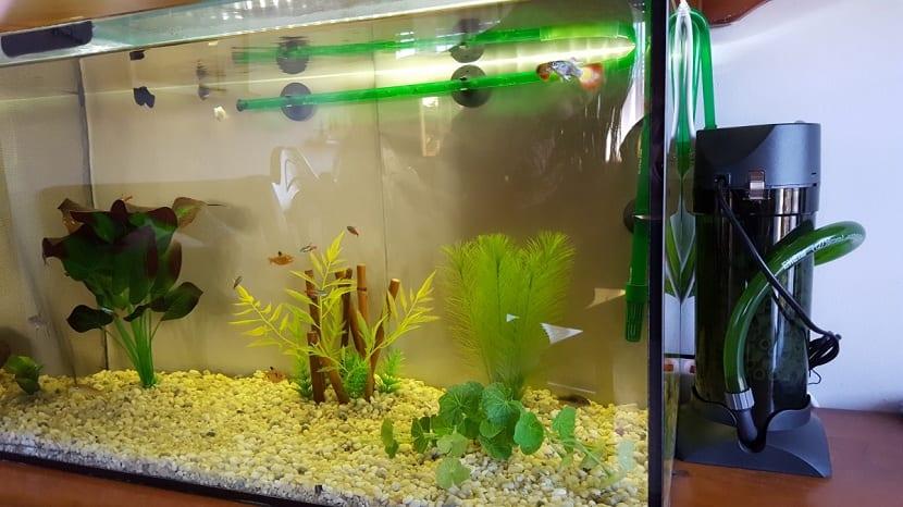 los mejores accesorios para tu acuario