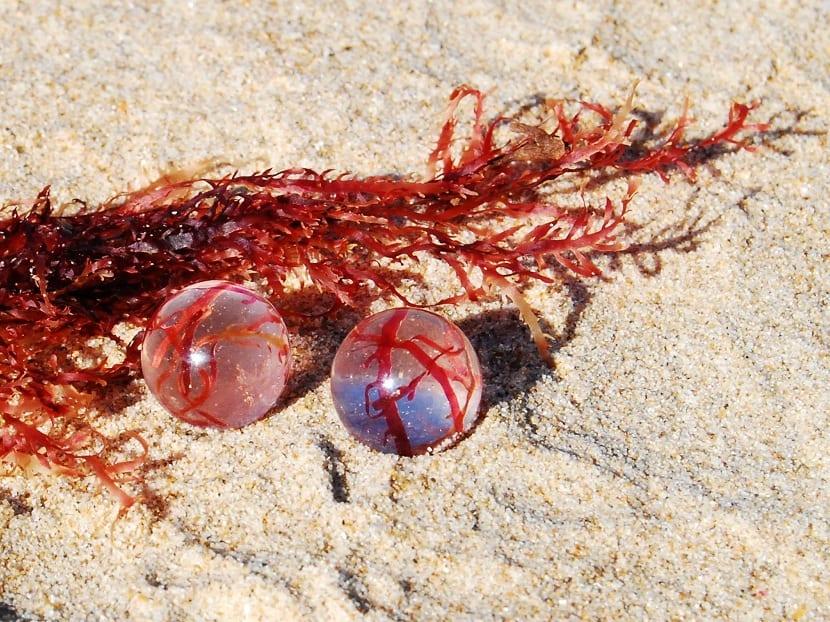 Características de las algas rojas