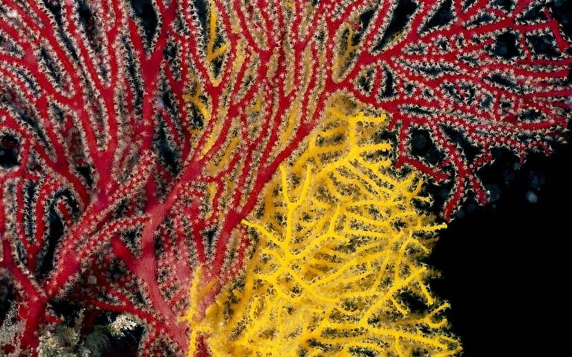 Propiedades de las algas rojas