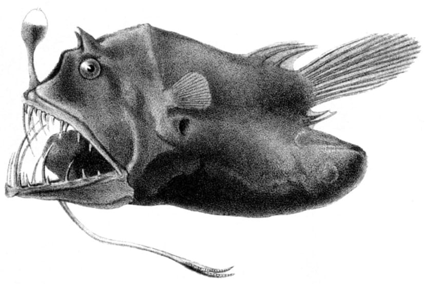 dibujo del pez linterna