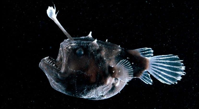 pez linterna en su ecosistema