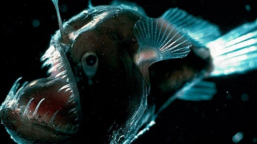 pez linterna