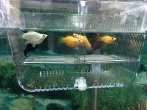 Parideras para peces