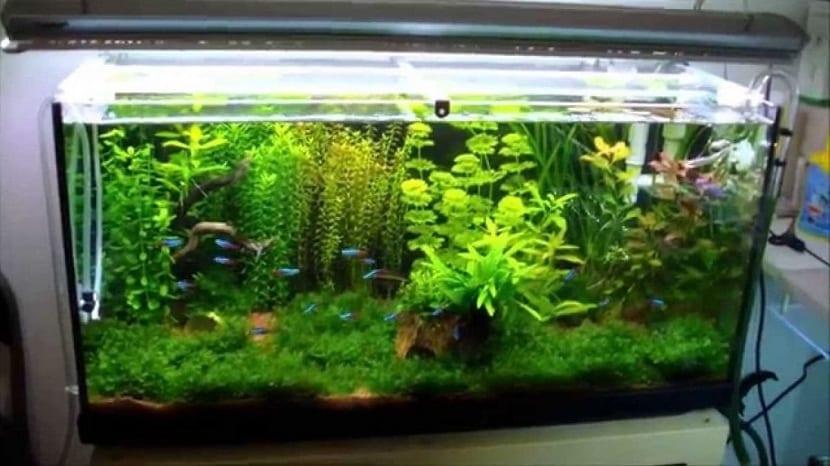 Acuario con plantas que necesita oxigenacion