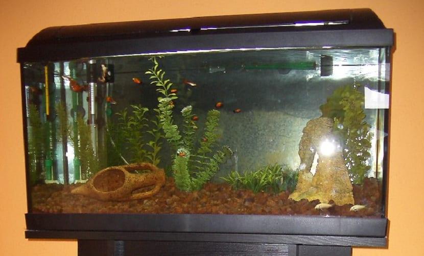acuario con filtro