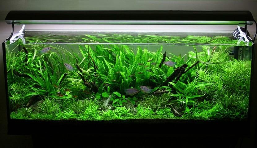 acuario con oxigenacion