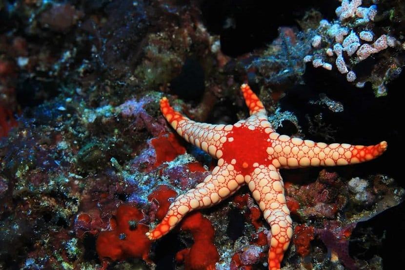 modo de vida de las estrellas de mar