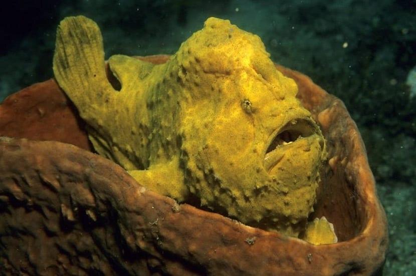 Picadura del pez sapo