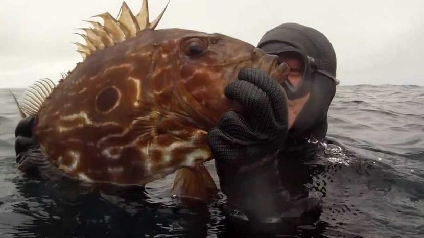 Pescando al pez san Pedro