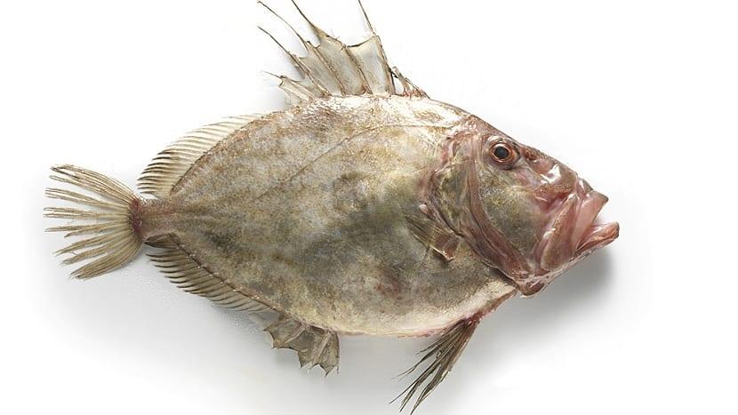 San pedro pez