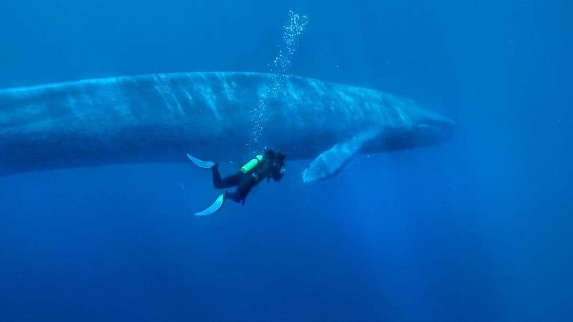Avistamiento de ballena azul