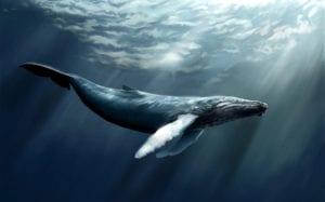 Peligros de la ballena azul