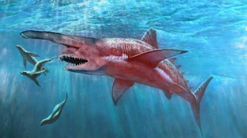 imagen del tiburón duende