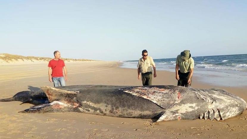 Tiburón en la costa